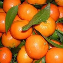 CLEMENTINES CORSES